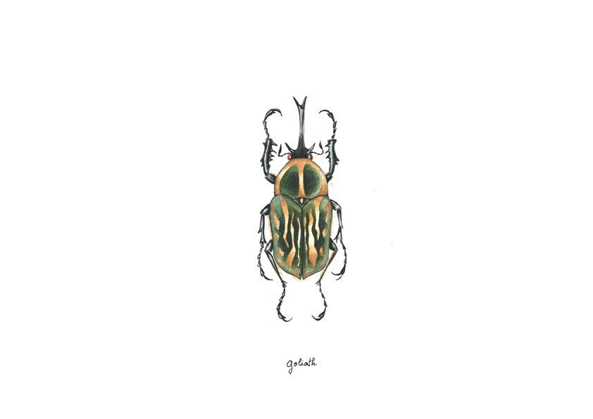 scarabegoliath.jpg