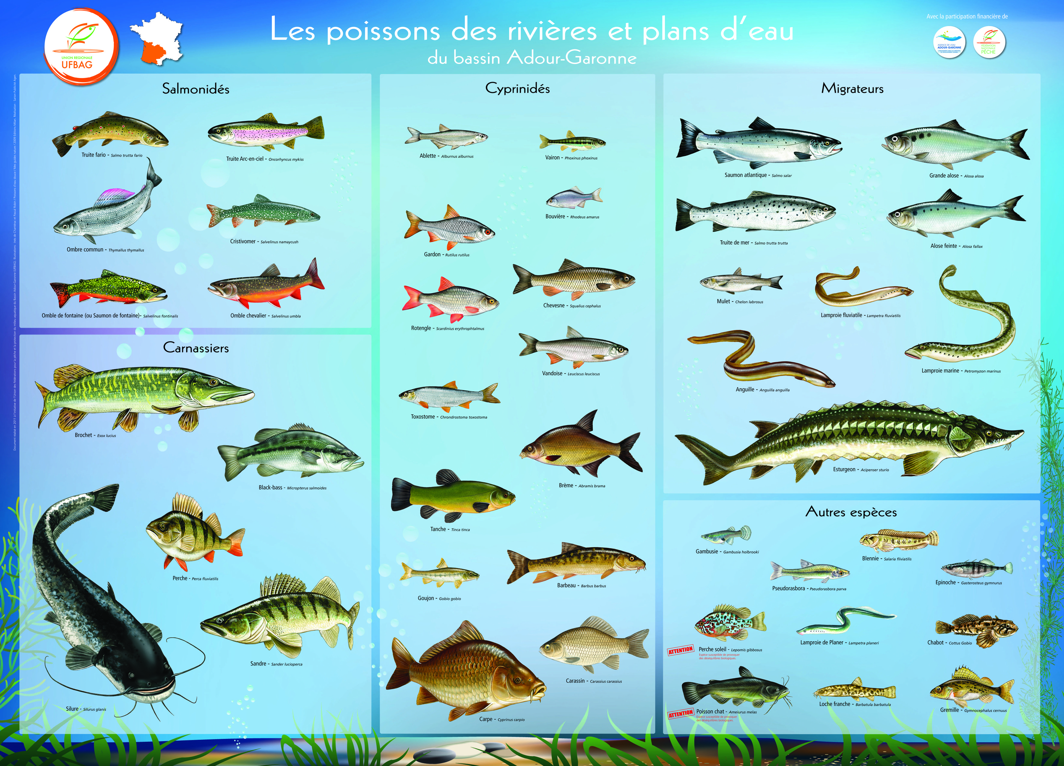 Poissons dans Dessins naturalistes UFBAG-Poster-4-ok
