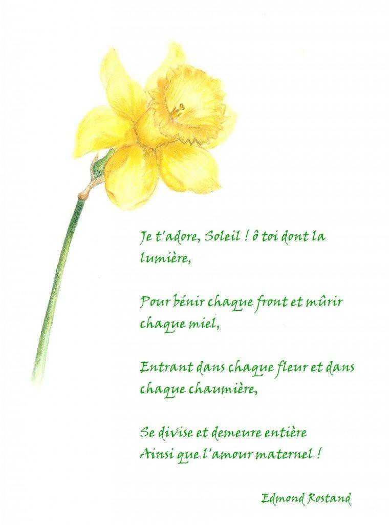 Hymne au soleil dans Dessins naturalistes hymne-au-soleil-rostand