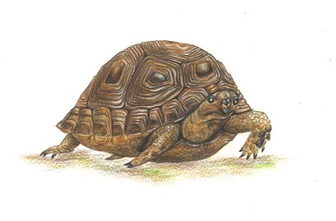 tortue mail